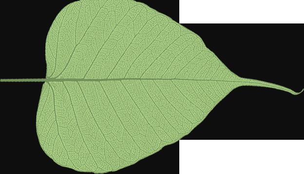Leaf it to us