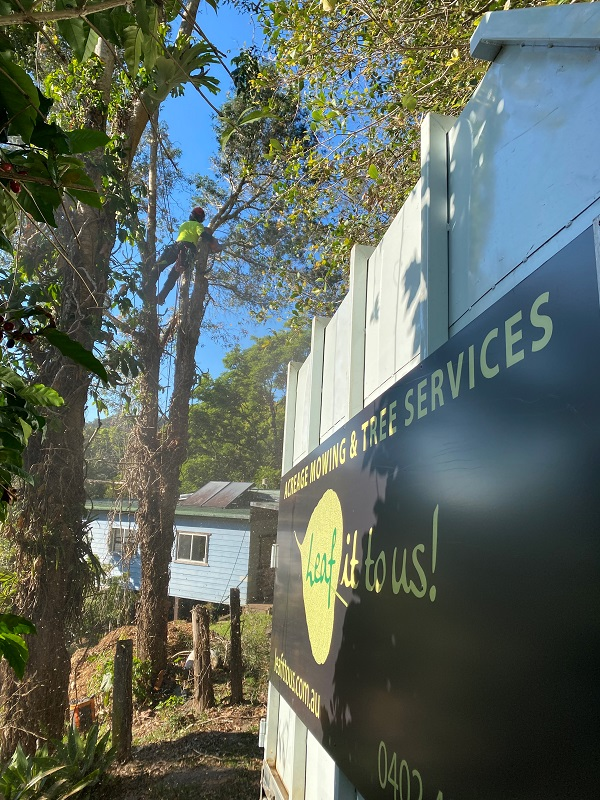 Tree lopping & Tree Removal