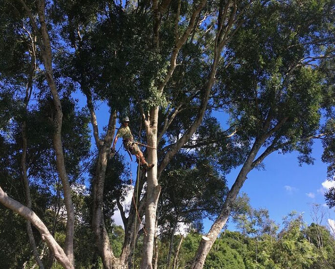 Pruning And Tree Lopping